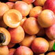 Free Download apricots. fruit Nulled