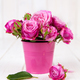 Free Download Pink roses(peony) in vase on white wooden background. flowers Nulled