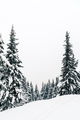 Winter forest, white trees inspiring landscape - PhotoDune Item for Sale