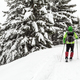 Winter hike in white snowy woods - PhotoDune Item for Sale