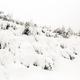 Winter forest, white trees inspiring landscape - PhotoDune Item for Sale