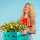 Free Download Happy caucasian blonde woman florist laughing and holding big box of tulips on blue background Nulled