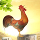 Rooster Crowing - VideoHive Item for Sale