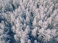 Aerial view of winter forest covered with snow, view from above. - PhotoDune Item for Sale