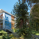 Villa with garden with araucaria tree, clear blue sky in Italy - PhotoDune Item for Sale