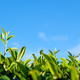 Green bud and leaves against blue sky - PhotoDune Item for Sale