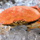 Big Dungeness crab on ice cube - PhotoDune Item for Sale
