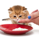 Little kitty eats the cream - PhotoDune Item for Sale