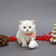 White British kitten in red scarf - PhotoDune Item for Sale