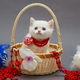 White British kitten in a basket - PhotoDune Item for Sale