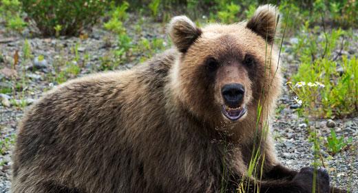 Animals of Kamchatka Peninsula