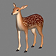 Fawn / Deer 3D Model - 3DOcean Item for Sale