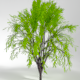 Animated Rigged Trees Pack - 3DOcean Item for Sale