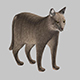 gray cat 3D model - 3DOcean Item for Sale