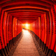 Torii gates, Fushimi Inari Shrine, Kyoto, Japan - PhotoDune Item for Sale