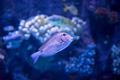 fish swimming in aquarium - PhotoDune Item for Sale