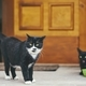Cats in front of door of house - PhotoDune Item for Sale