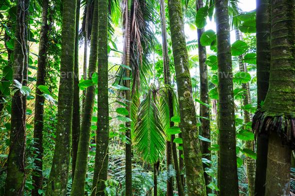 Jungle - Stock Photo - Images