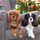Two cute dogs on the armchair - PhotoDune Item for Sale