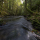 A river flows between ancient forests and mossy rocks - PhotoDune Item for Sale