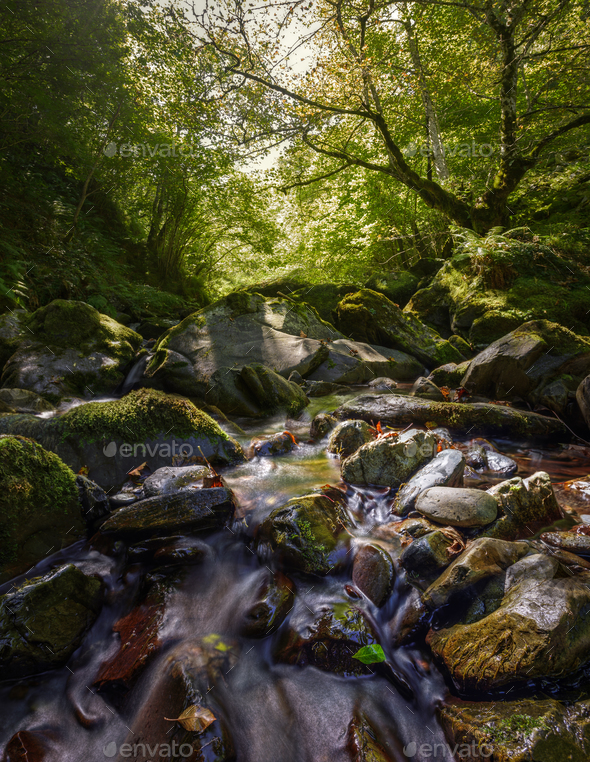 mountain stream through forests - Stock Photo - Images