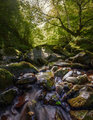mountain stream through forests - PhotoDune Item for Sale