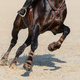 Close up image of legs of running bay sport horse. - PhotoDune Item for Sale