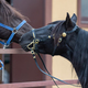 Portrait of two spanish horses. - PhotoDune Item for Sale