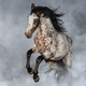 Appaloosa horse rearing in light smoke. - PhotoDune Item for Sale