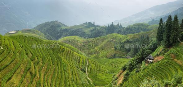 Views of green Longji terraced fields - Stock Photo - Images