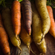 Heirloom Rainbow Carrots - PhotoDune Item for Sale