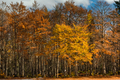 Colorful autumn trees at park edge - PhotoDune Item for Sale