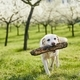 Cheerful dog in spring nature - PhotoDune Item for Sale