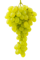 Single bunch of grapes - PhotoDune Item for Sale