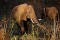 Feeding African elephant - PhotoDune Item for Sale