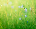 Summer Grass And Flowers - PhotoDune Item for Sale