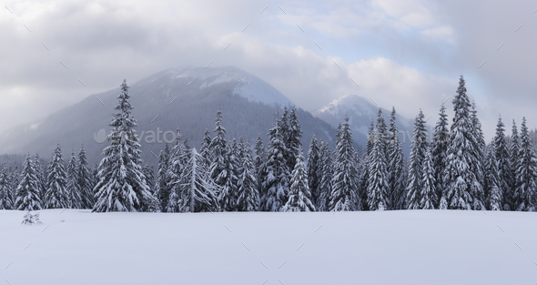 Panorama of fantastic winter landscape with snowy trees - Stock Photo - Images