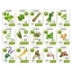 Herb and Spices Tag or Price Label Set Design - GraphicRiver Item for Sale