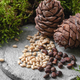 Pine cones and nuts on a gray concrete background. - PhotoDune Item for Sale