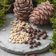 Two pine cones and nuts on a gray concrete background. - PhotoDune Item for Sale