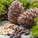 Pine cones, nuts and natural moss on a gray concrete background. - PhotoDune Item for Sale