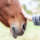 A woman's hand touching the head of a horse - PhotoDune Item for Sale