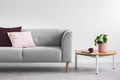 Plant on wooden table next to grey couch with pink and violet pi - PhotoDune Item for Sale