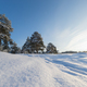 Pine forest in winter sunny day - PhotoDune Item for Sale