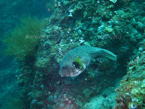 Thriving coral reef alive with marine life and fish, Bali - Stock Photo - Images