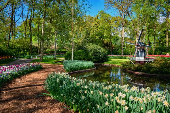 Keukenhof flower garden. Lisse, the Netherlands - Stock Photo - Images
