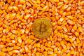 Bitcoin on top of corn kernels heap - PhotoDune Item for Sale