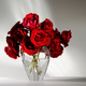 beautiful red roses - PhotoDune Item for Sale
