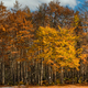 Colorful autumn trees at park edge - PhotoDune Item for Sale