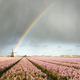 Rainbow over flowers and a windmill during a spring storm - PhotoDune Item for Sale